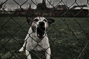dog bite injury